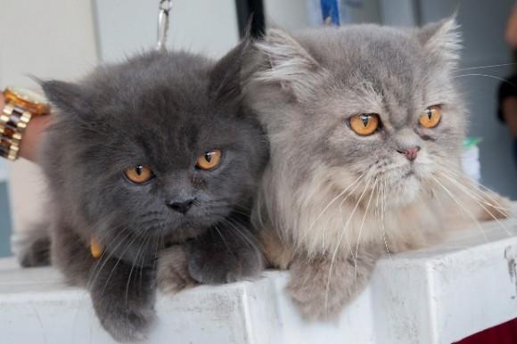 Gatos e cães com mais de 3 meses devem receber a vacina contra a raiva (foto Pedro Augusto)