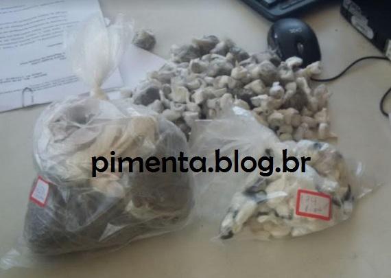 Maconha e cocaína apreendida no Presídio de Itabuna.